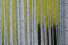 "Birch Trees IV,  Cyril Seme,  36""x40"""